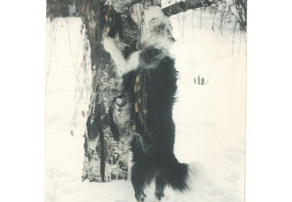 Sneaky Bud - February 1993